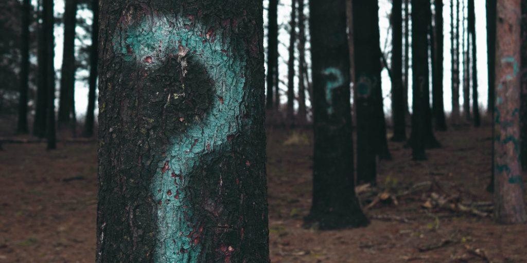 Bomen met vraagtekens erop geschilderd